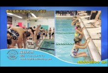 Dolphin Swimming ~ Celebrating 20 Years of Excellence